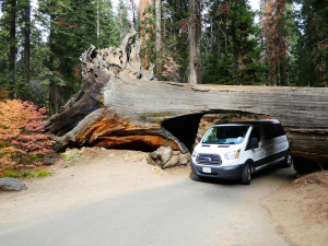 USA: Sequoia NP